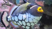 Aquarium Love!