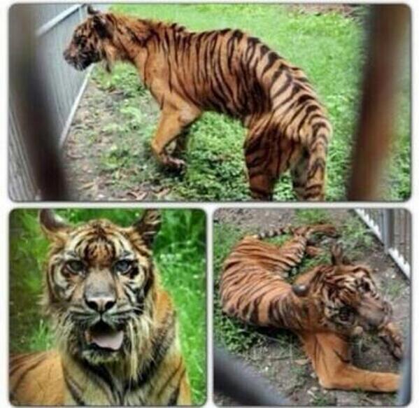 Universal Hewan Hewan Terlantar Di Kebun Binatang