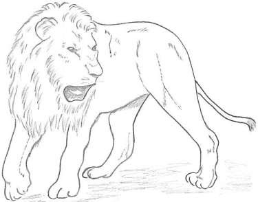 2 further pobarvanke tag further How To Draw Adult Simba likewise 534028468290554740 furthermore Disney Drawings. on easy to draw simba from the lion king