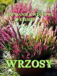 http://kreatywnybazarek.blogspot.com/2015/08/kwiatowe-wyzwanie-wrzesniowe.html