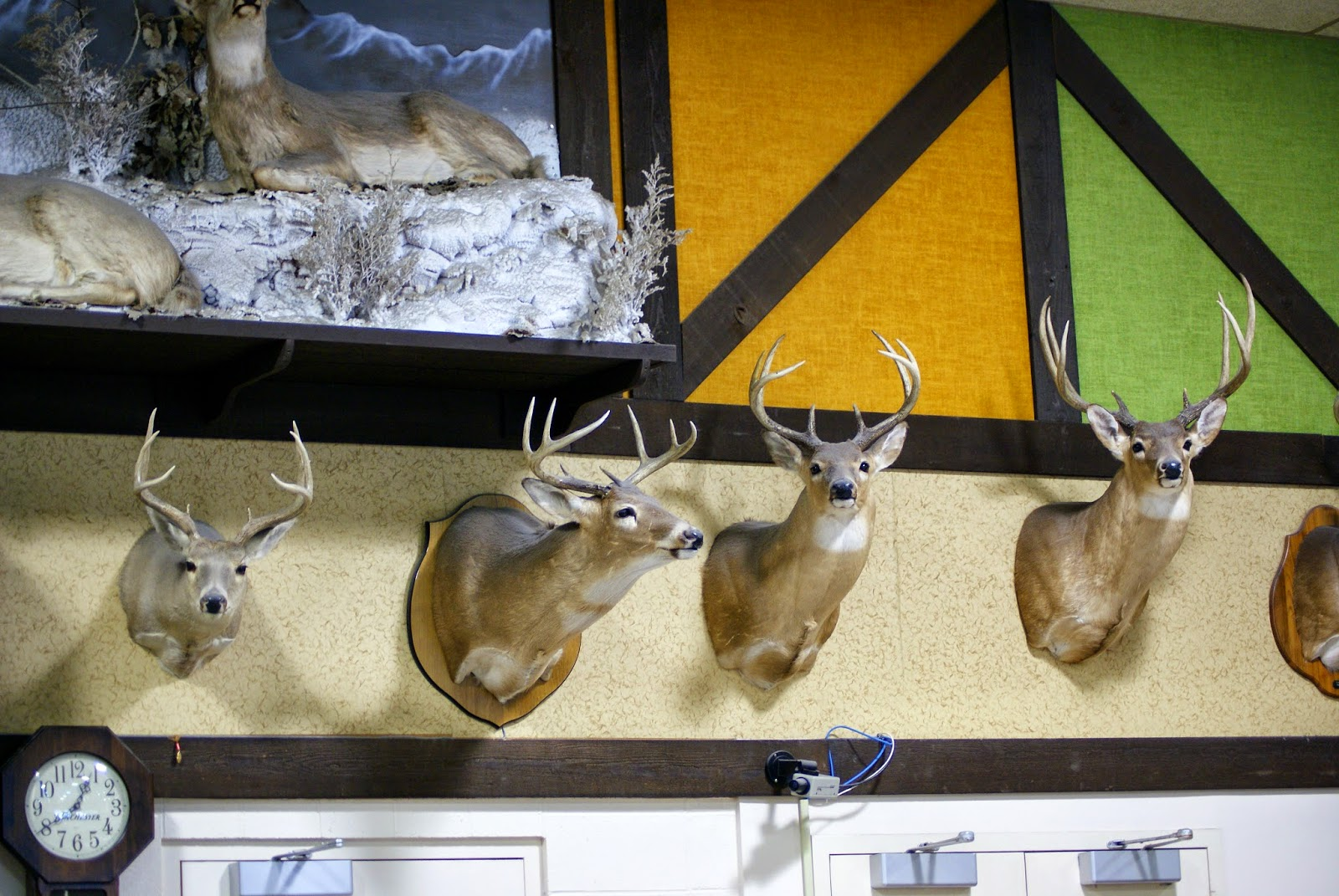 Deer heads at the Hunting Store, Alexandria