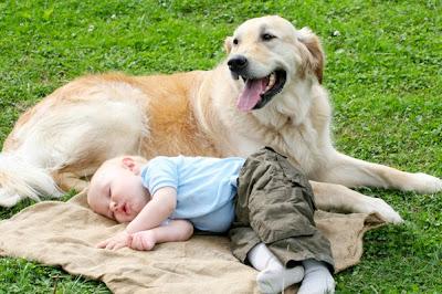 cachorro com bebe