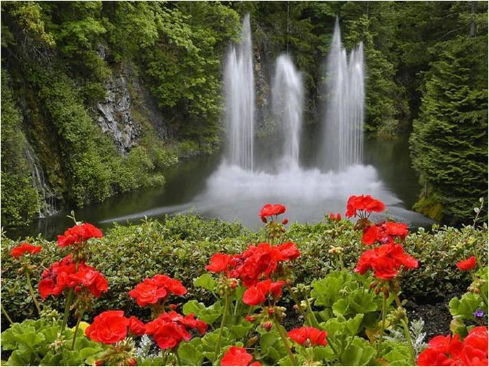 Beautiful Red Flowers with Waterfalls