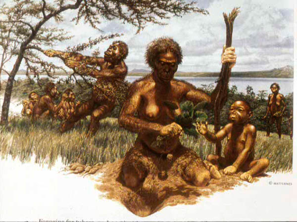 early hominids and tools Among the finds are assemblages of stone tools dated to between 22 myrs and   until about 25 million years ago, early hominids lived on foods that could be.