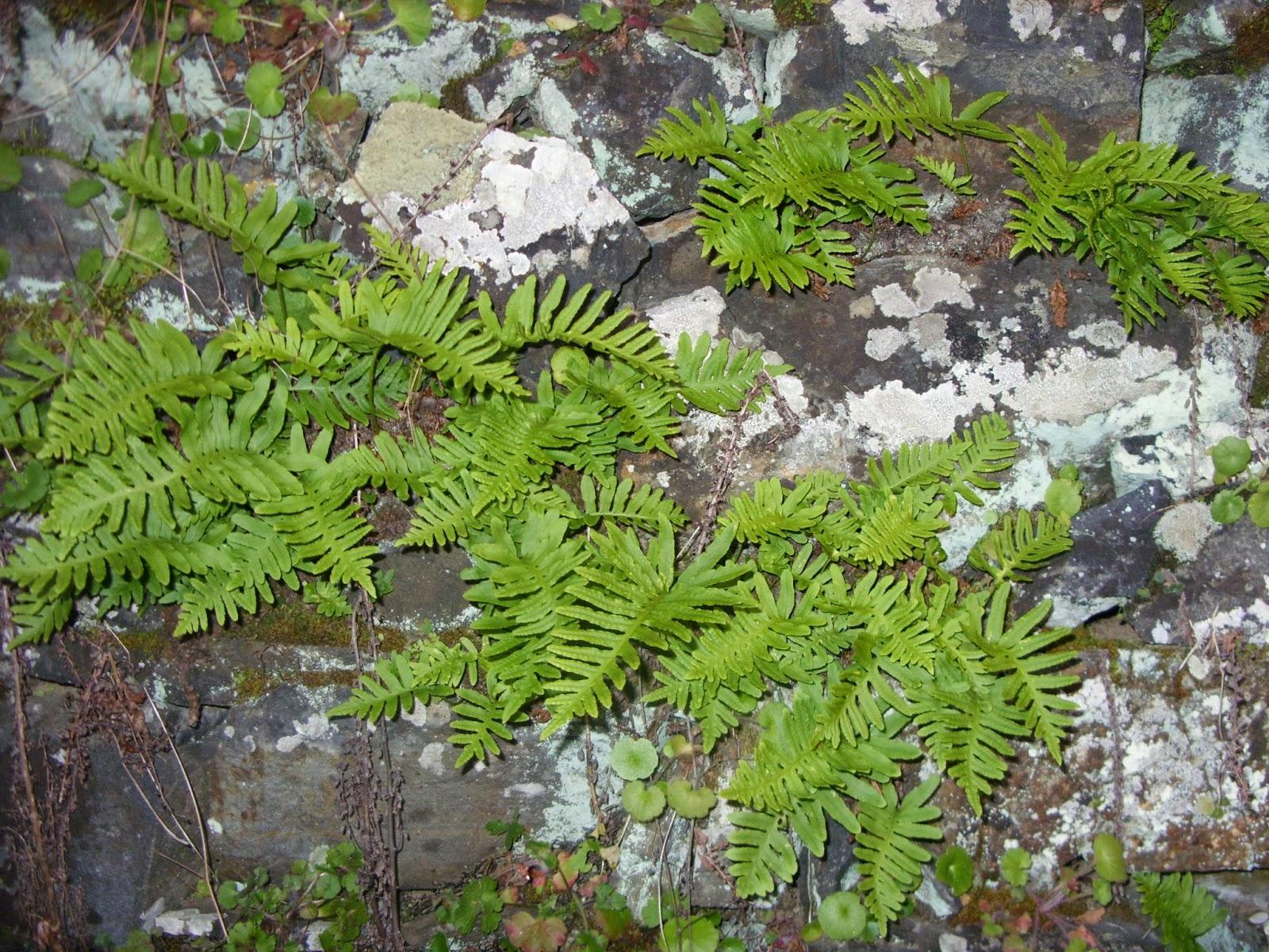 Muros de Pedra - aumente a biodiversidade do seu jardim