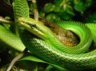 ular mimpi