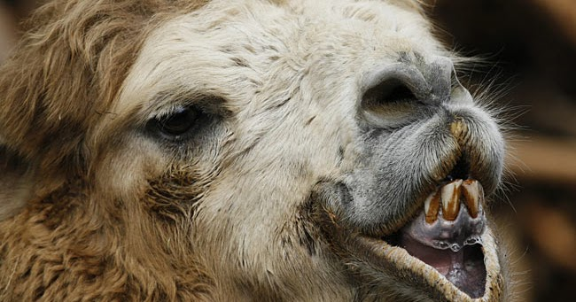 ugly animals funny animals