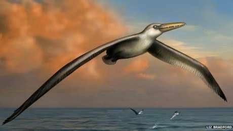 http://dangstars.blogspot.com/2014/07/ilmuwan-temukan-burung-terbesar-di-dunia.html
