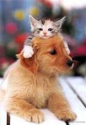 FOTOS DE ANIMALES EN FAMILIA (fotos graciosas de animales )