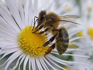 mutualismo entre insetos e plantas