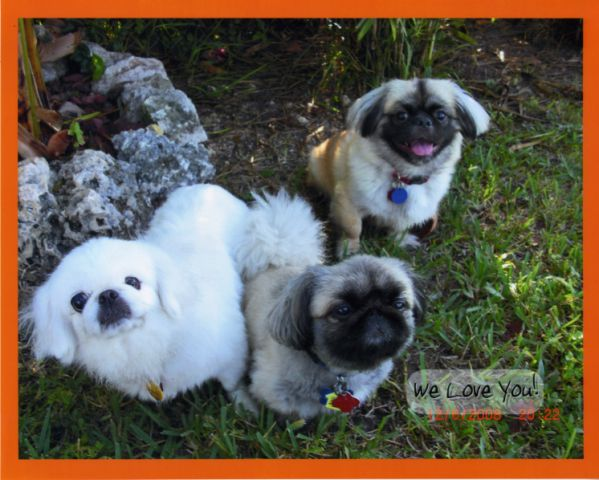 The Three Pekes