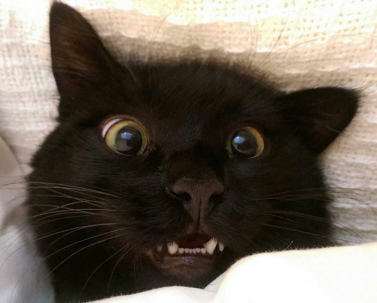 Funny cats - part 157, cat photos, best cat picture