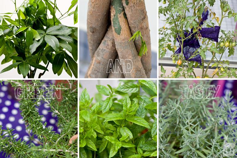Pflanzen 2012