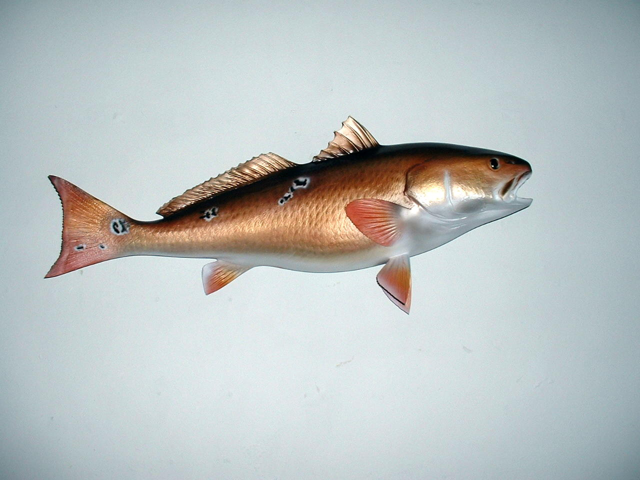 Monkey Blog Redfish Wallpaper