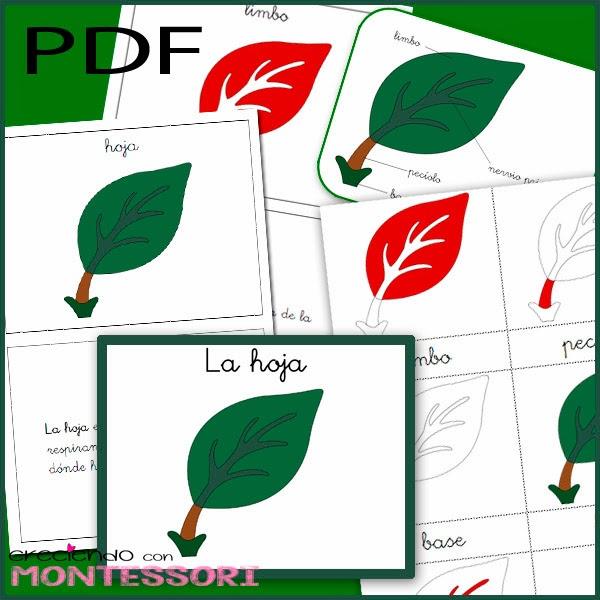 Botánica Montessori - La Hoja - Imprimibles gratis | Creciendo con ...