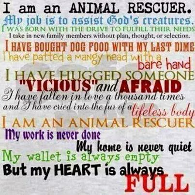 how to become an animal rescuer