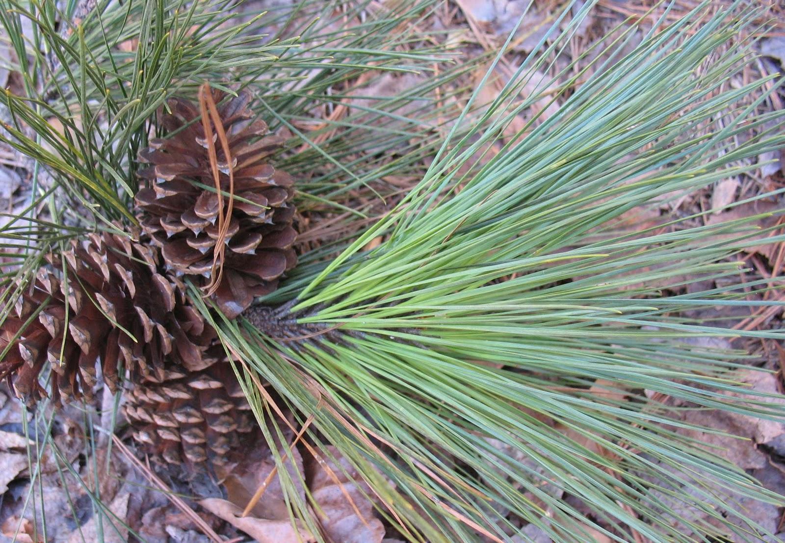 Using Georgia Native Plants: January 2012