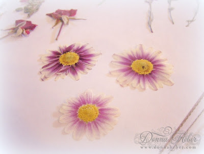Donnas designs pressed flowers if you dont have a press you can always do it the girl scout way after picking your fresh flowers or foliage arrange them on a piece of wax paper and mightylinksfo