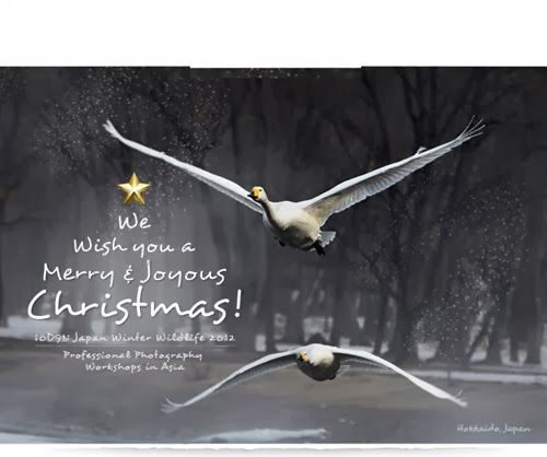 Unique Christmas Greetings Cards With Quotes In 2013