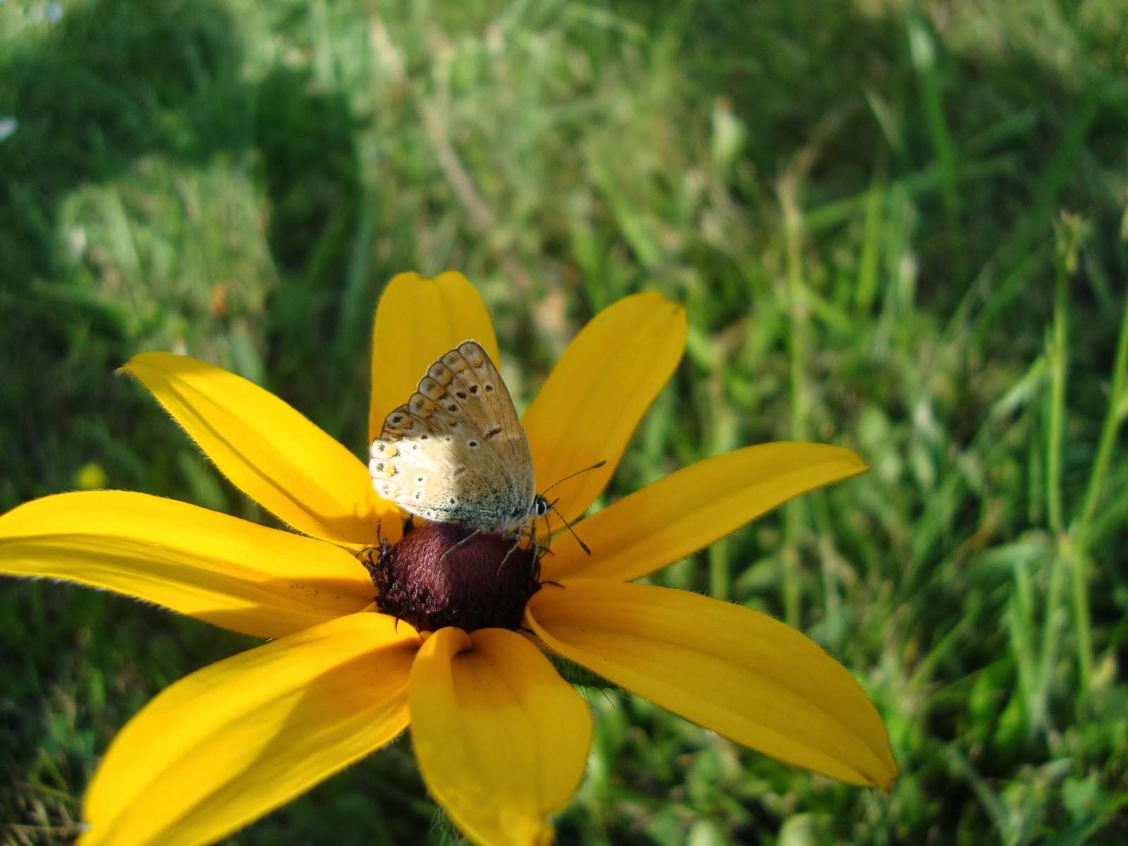 lato, kwiaty,owady