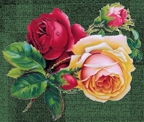 ZOOM DISEÑO Y FOTOGRAFIA: 30 rosas vintage para scrap ...