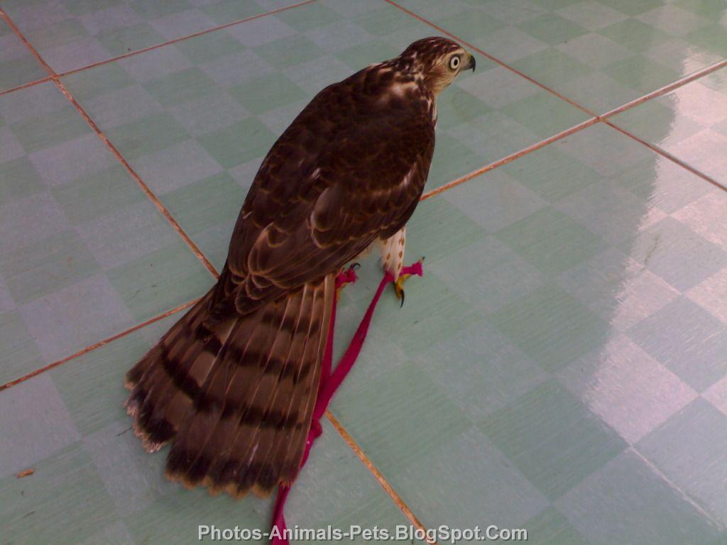 http://3.bp.blogspot.com/-8uSz-KA7B0g/TrWDYbQKnLI/AAAAAAAACNE/qLqVW2tiCvE/s1600/Pet%2Bbirds_.jpg