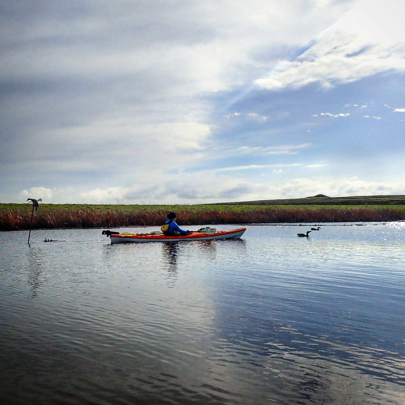 Kayaking the california delta old river to mountain house creek the sun broke through the clouds and bathed us in its 55 degree warmth we launched from rivers end marina at 1215 and paddled south on old publicscrutiny Image collections