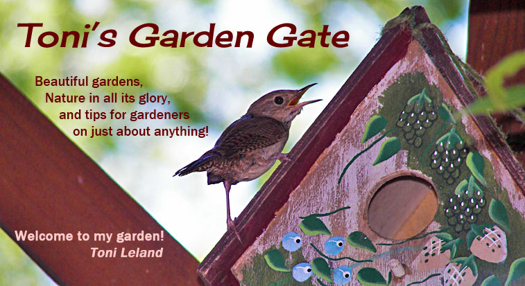 Toni Leland - The Garden Gate