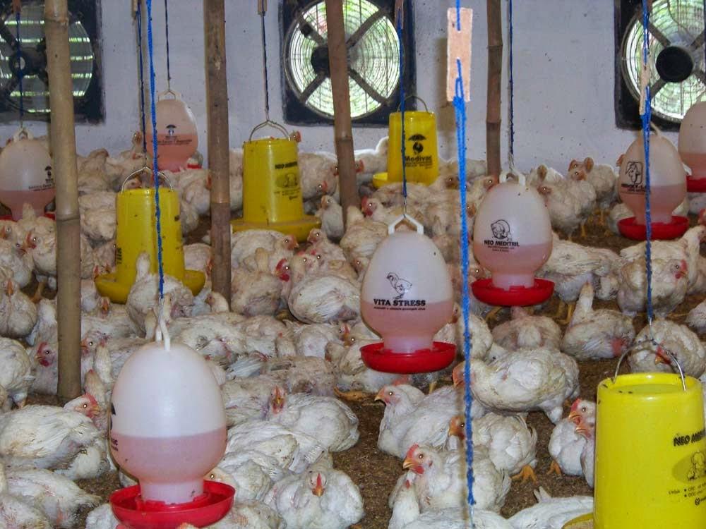 Manfaat biologi dalam bidang peternakan, pertanian, dan ...