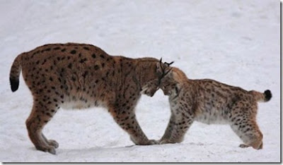 Lover Animals kissing