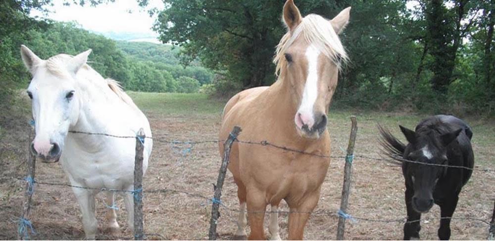 Helping Three Horses