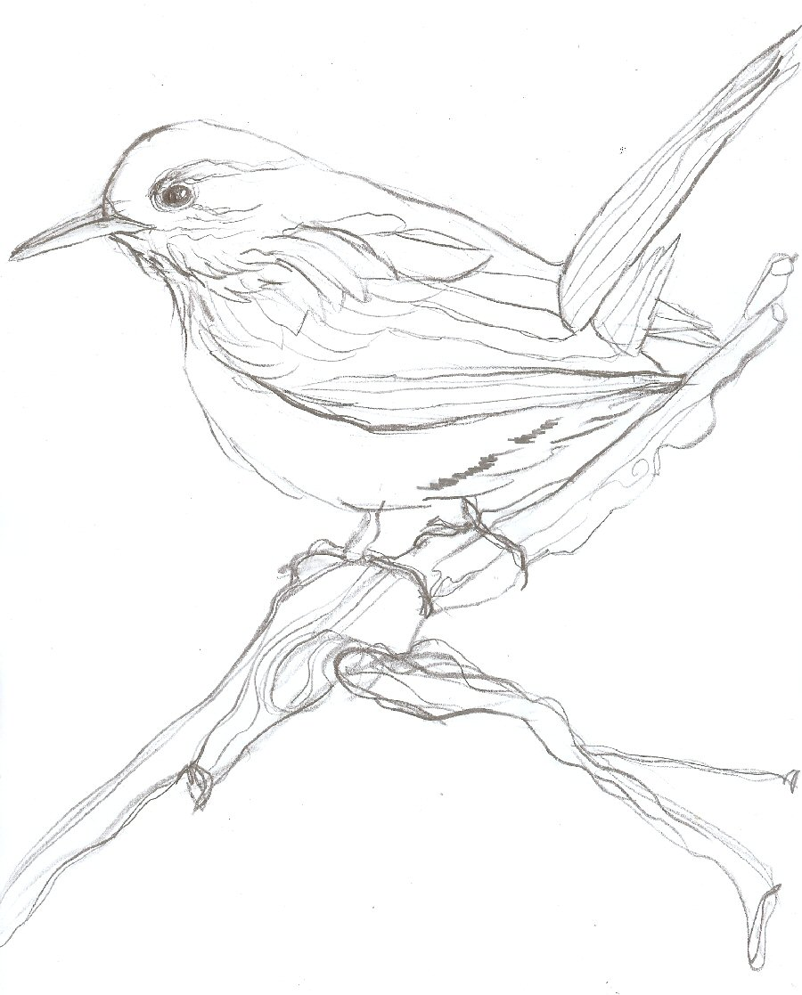 Easy sketch of a bird intellego iphone generations list 183 august alsina smoking 183 pro ana easy sketch of a bird altavistaventures Image collections