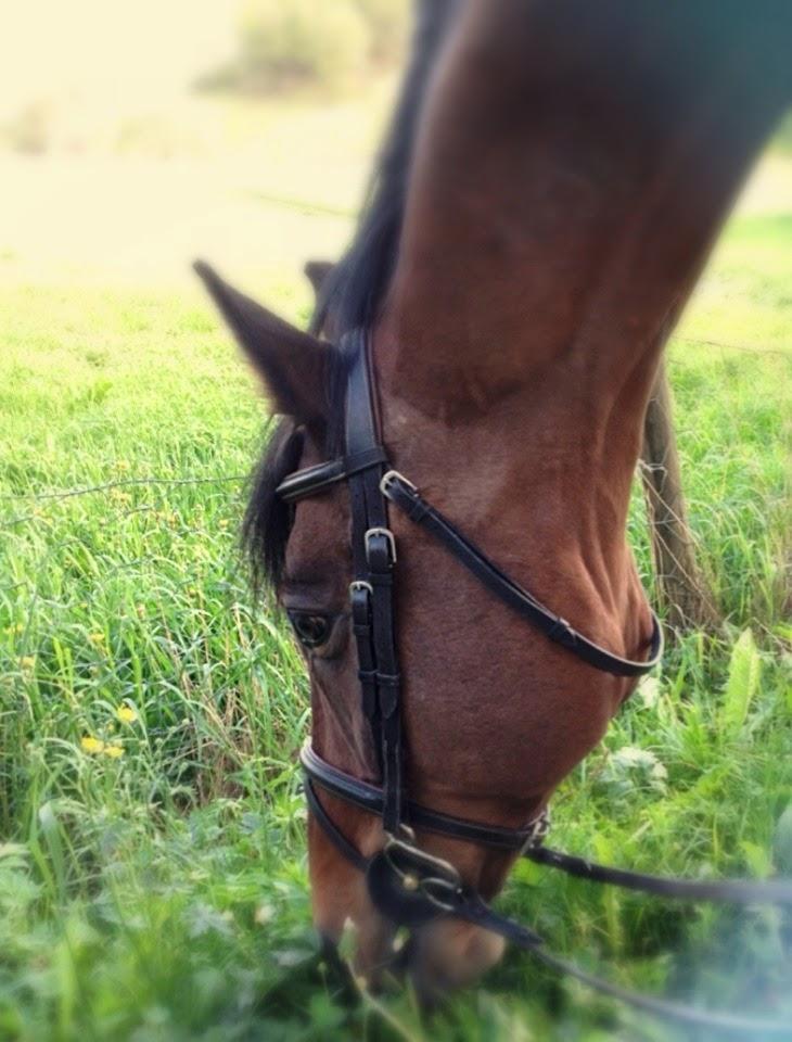 Hesten vår