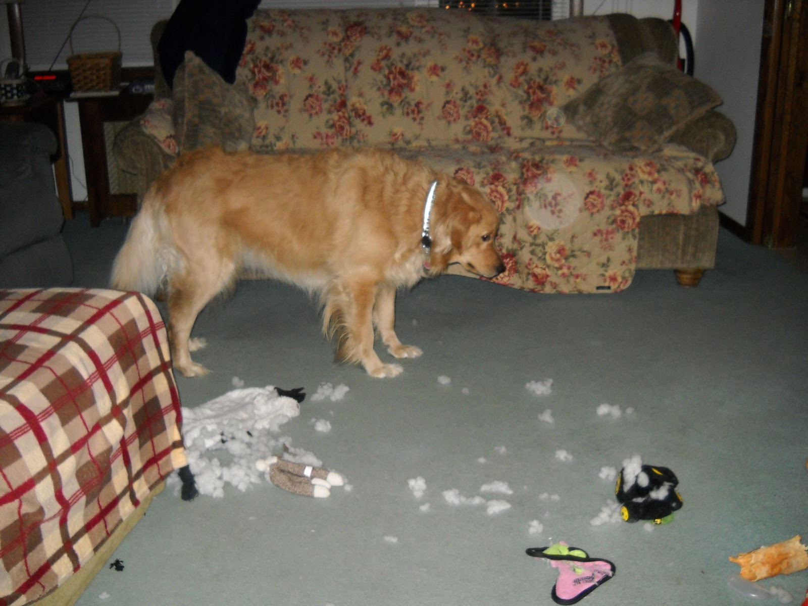 how to help guest dog reliebe separation anxiety