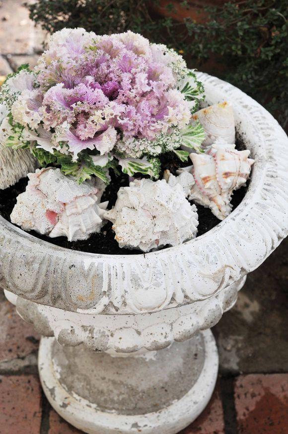 Cavolo ornamentale blossom zine blog for Cavolo ornamentale