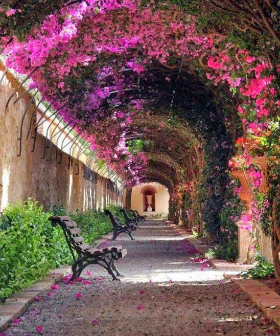 Curiosidades del mundo jard n de monforte curiosidades for Jardines de monforte valencia