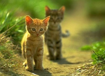 2 gambar kucing lucu dan menggemaskan