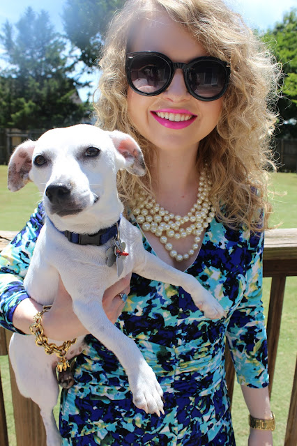 Nashville Human Association, Pet Adoption, Rescue Dog, Lawyer, fashion blog, J. Crew pearl hammock necklace