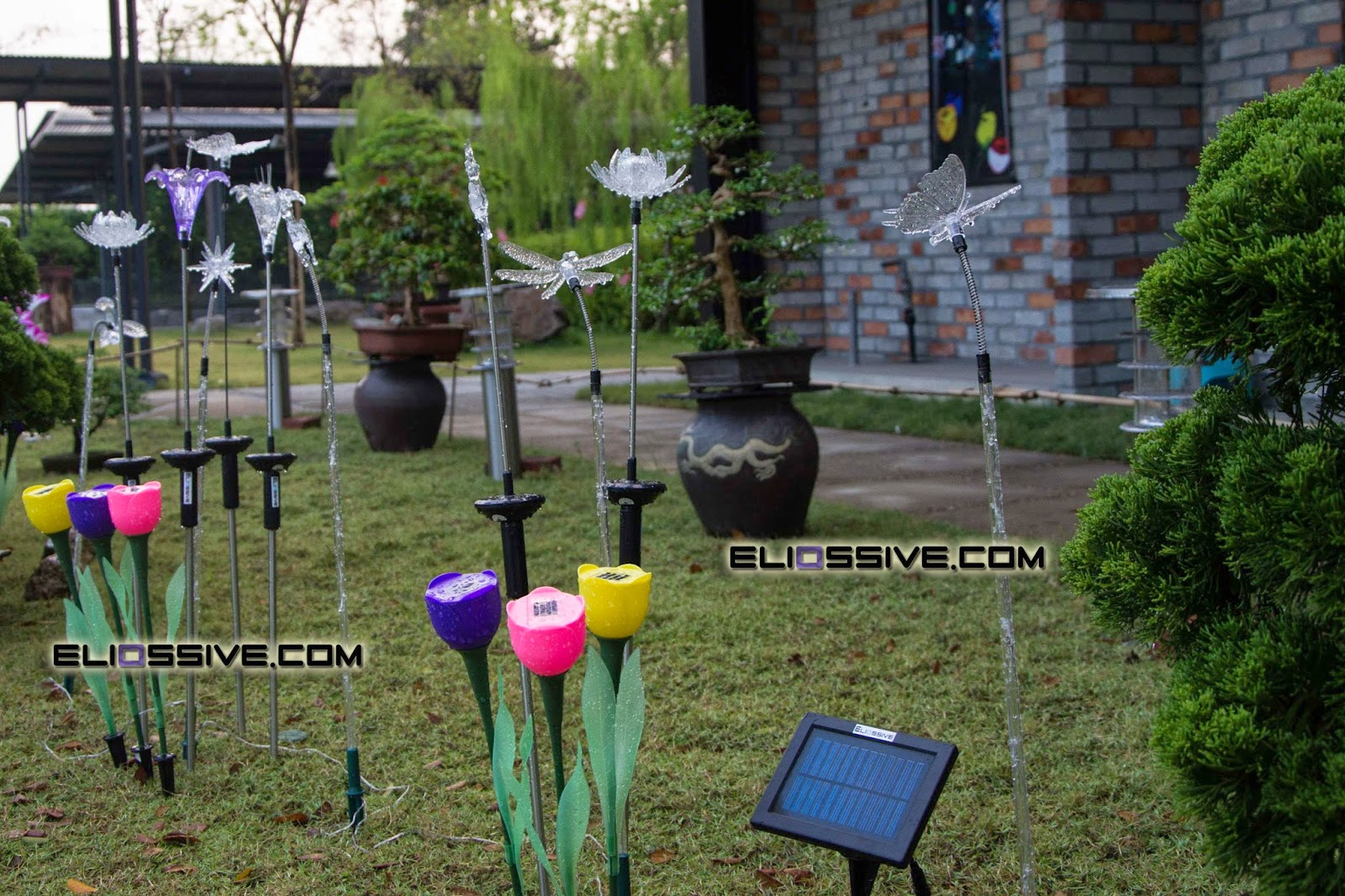 MY GREEN FINDER Plant Vendors Magical Solar Lightings In The Garden