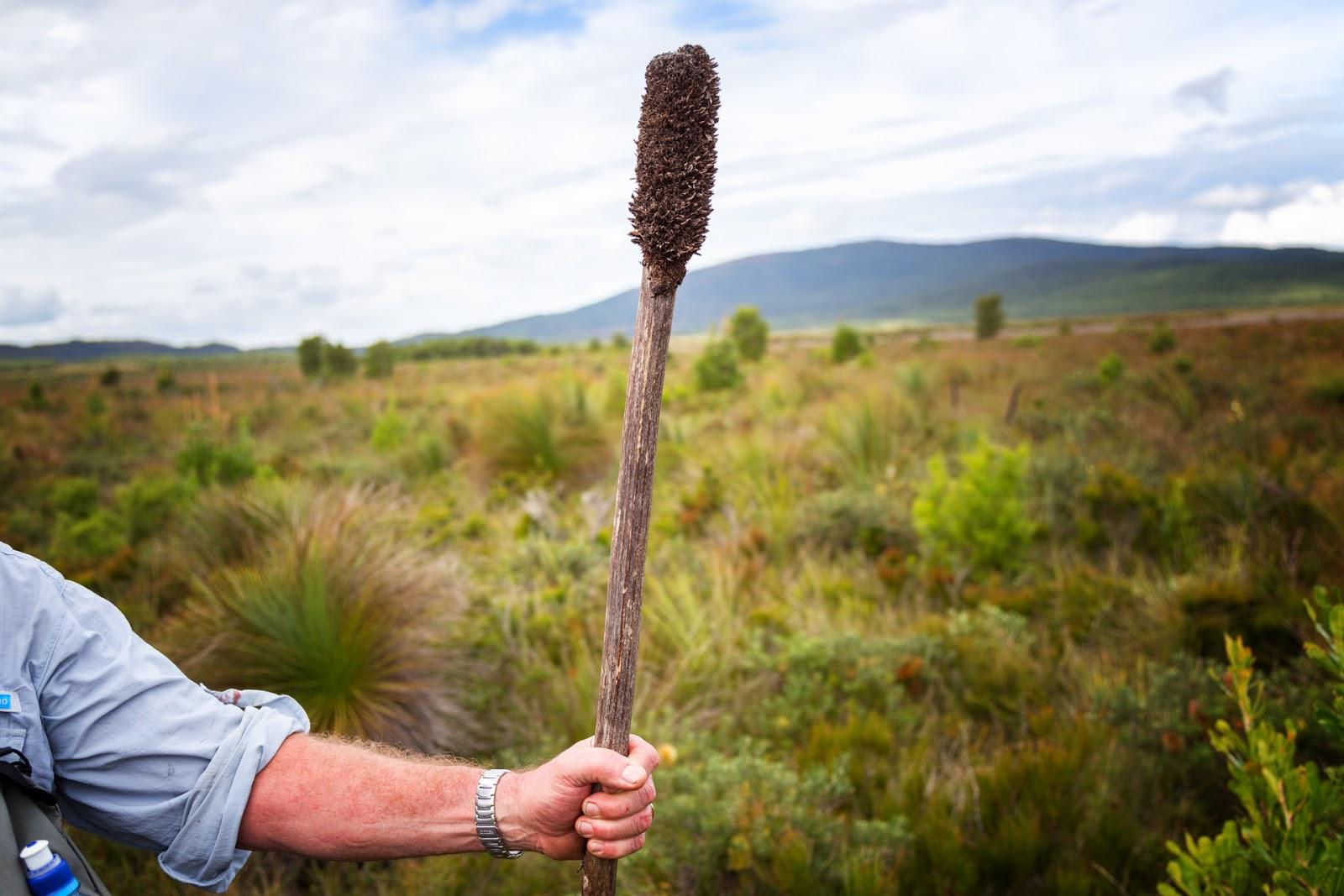holding stick wilsons promontory