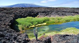 Punta Moreno, Isabela Island, Galapagos