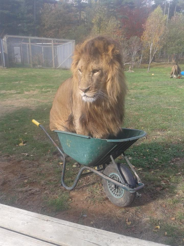 Funny animals of the week - 30 October 2015, animal photos, animal funny picture, funny pictures