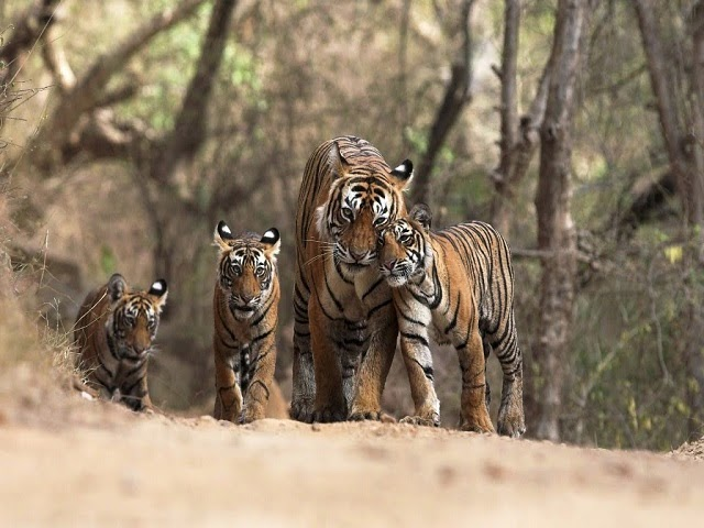 Dudhwa National Park - Well-Known Tiger Reserve