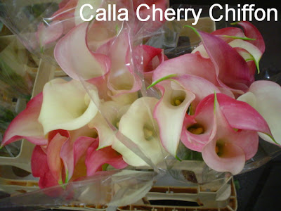 Calla Cherry Chiffon photo gallery