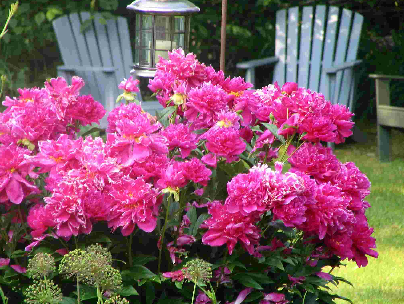 Garden Design Flower Garden Design Ideas