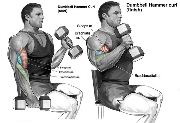 Exercises for Best Biceps Workout - all-bodybuilding.com