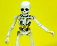 Re-ment Skeleton