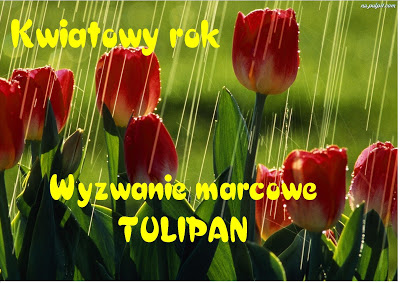 Marcowy tulipan