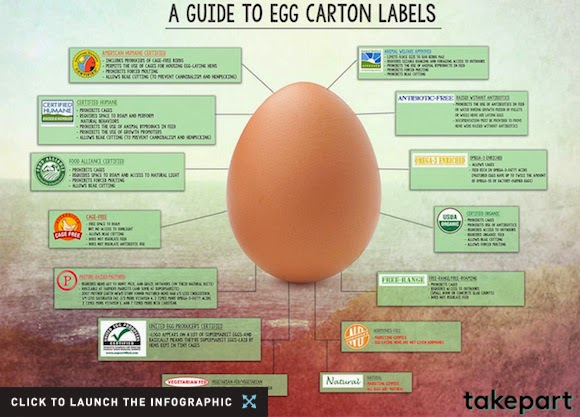 A Guide to Understanding Egg Carton Labels