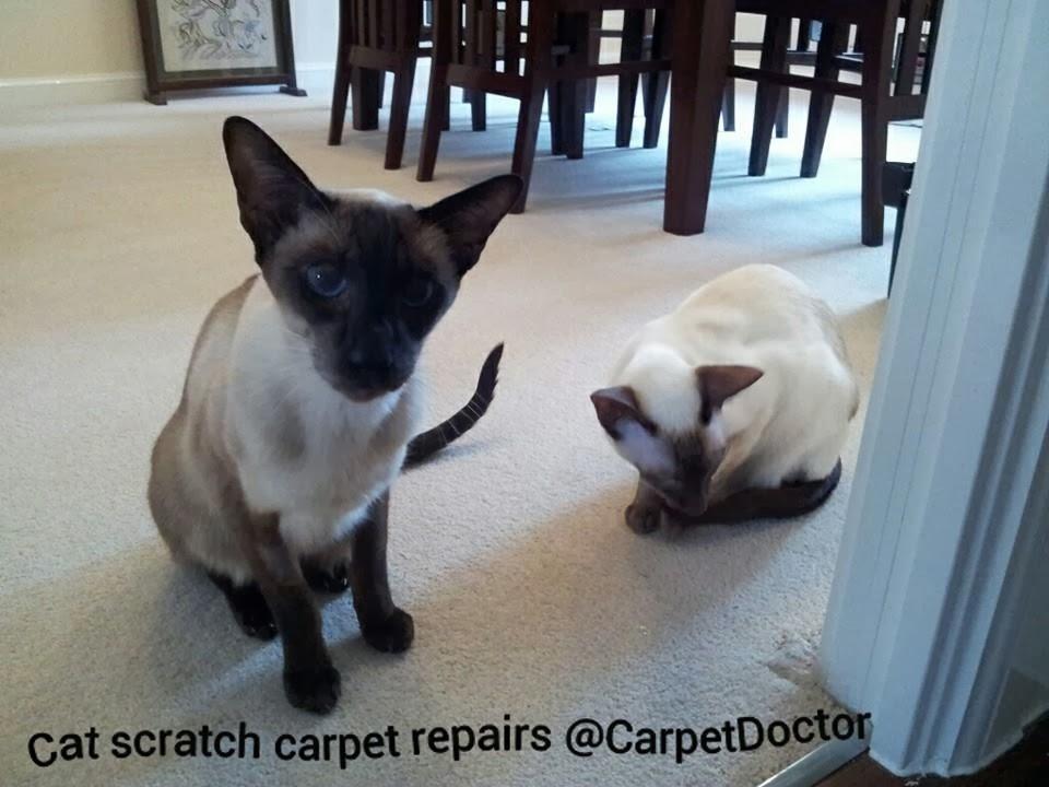 Carpet & Rug Repair Service for Pet Damage at Home.